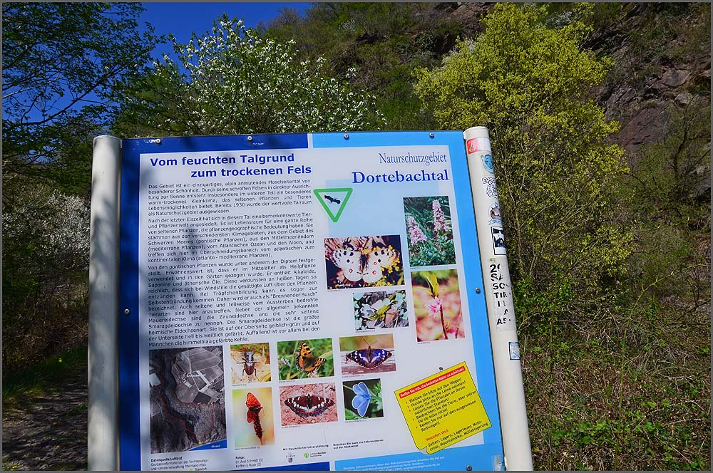 Dortebachtal (7)