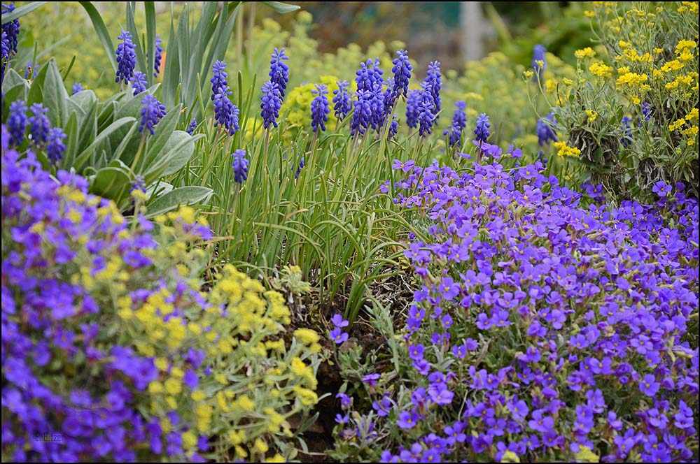 Ein Frühlingsblumengarten