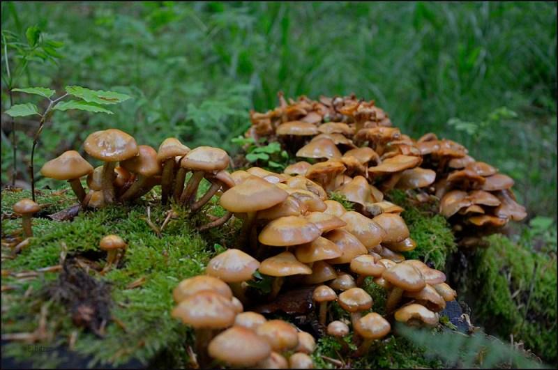 Diese Pilze hier veranlassen zu der Frage, ob die um diese Jahreszeit überhaupt hier wachsen dürfen