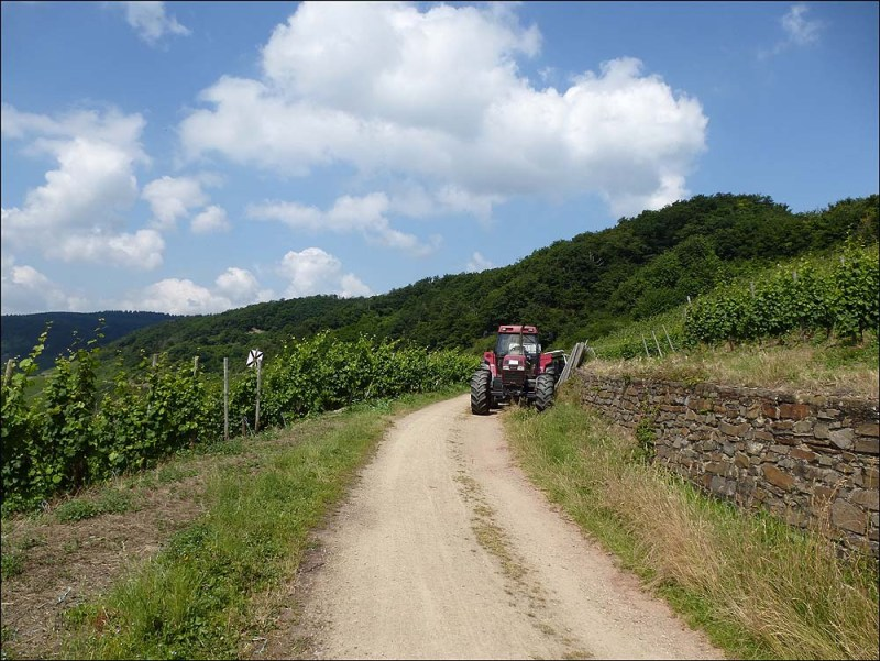 Es wird zwar nicht mit Fliegern gesprüht, aber mit Kleingeräten und Bindearbeiten werden noch am Weinstock ausgeführt.