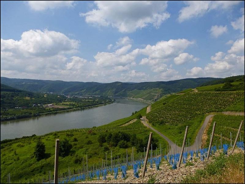 Rheingoldbogen (144)