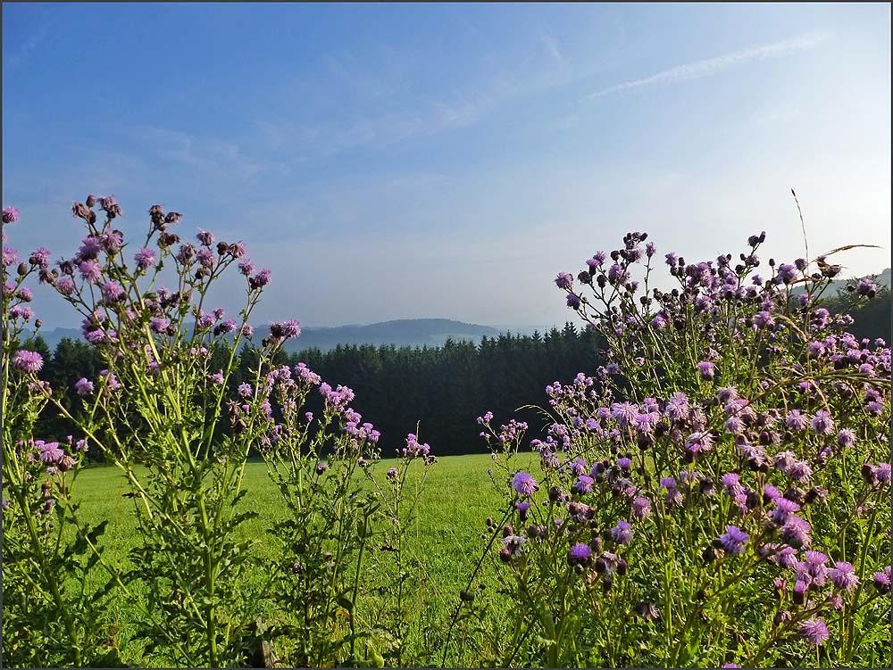 Weites Wasserland_D6 (23)