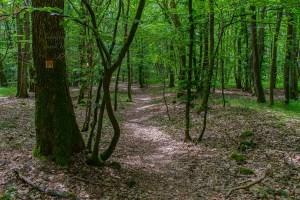 Buchenwald mit viel Laub zu meinen Füßen