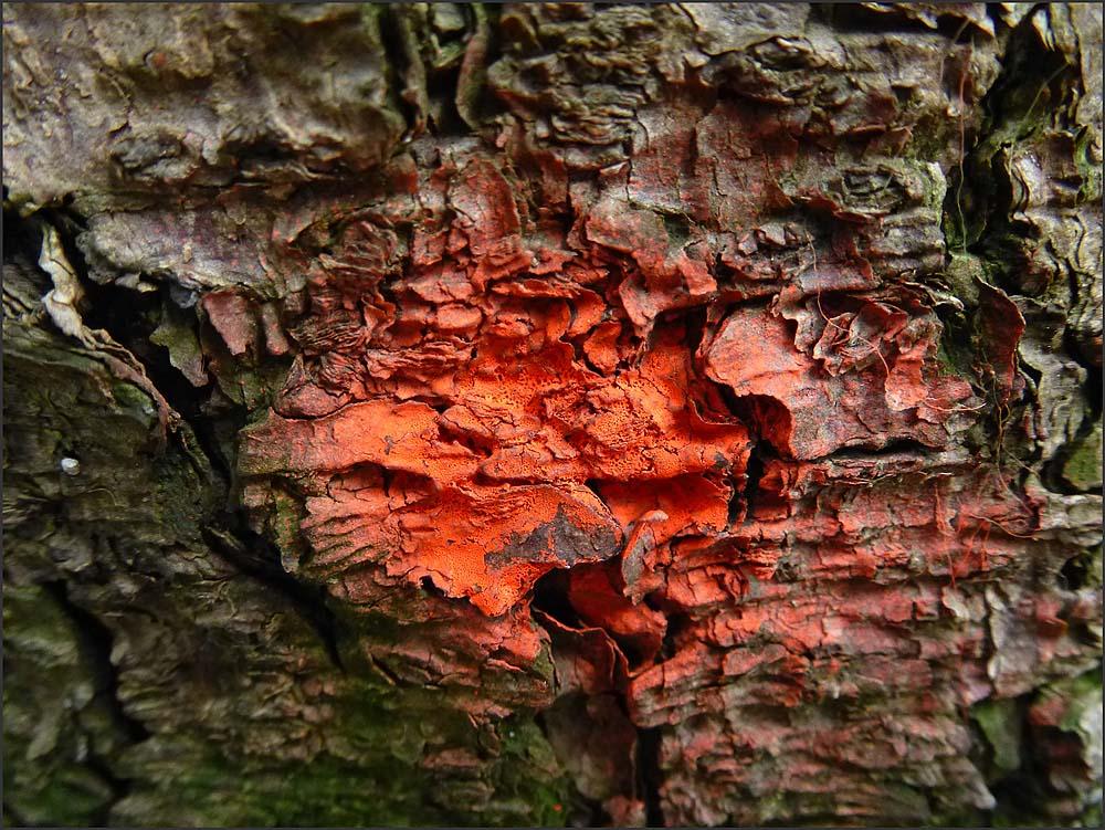Die roten Flecken am Baum - Sind das Röteln?
