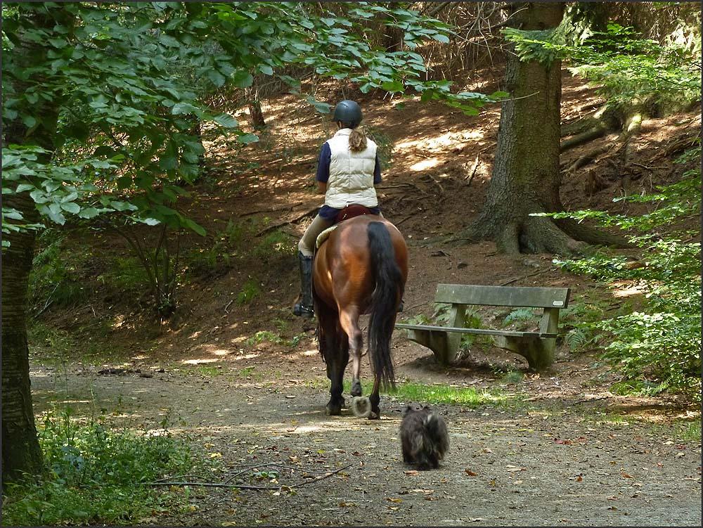 Kleiner Hund und großes Pferd im Felderbachtal (51)