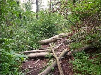 Waldschluchtenpfad (34)