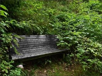 Waldschluchtenpfad (61)
