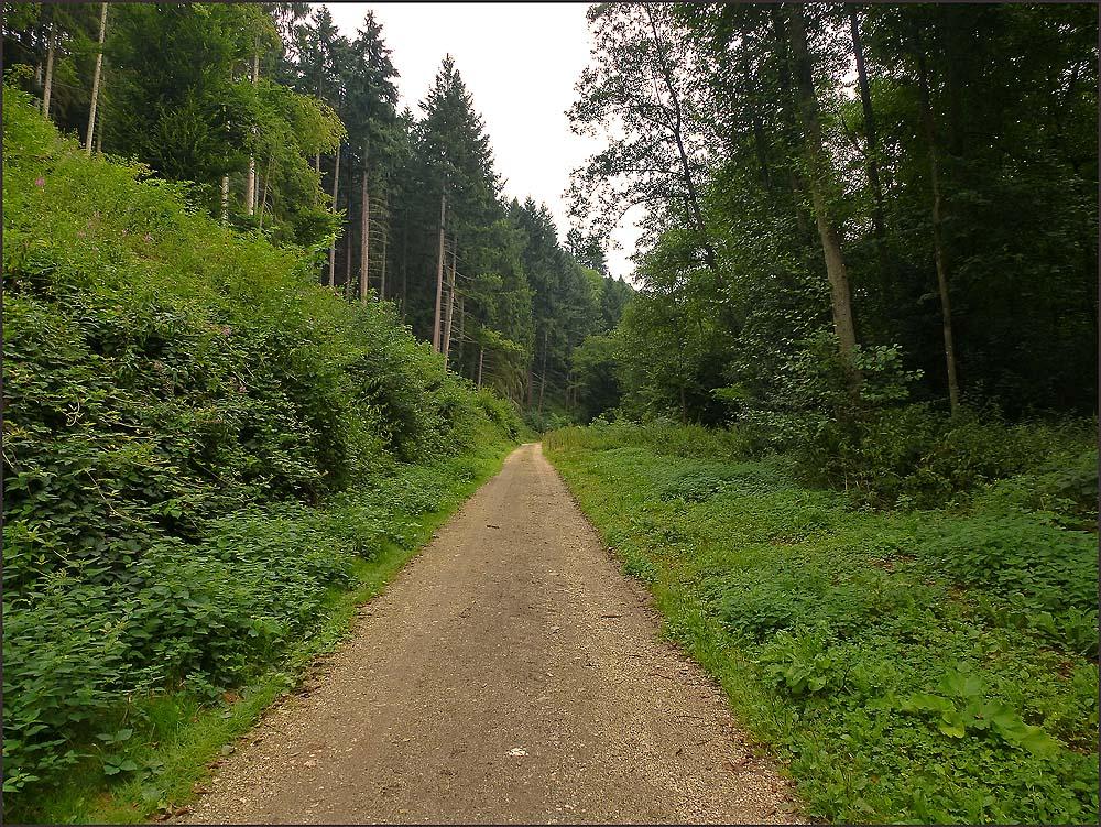 Waldschluchtenpfad (69)