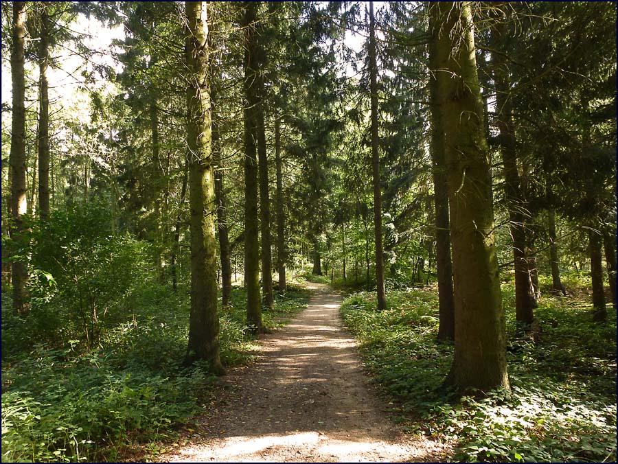 Die Waldwege sind zwar etwas breiter, aber unglaublich schön