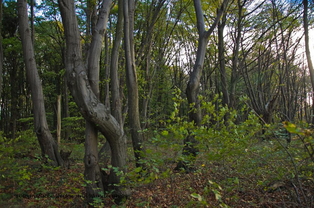 Bäume, die sich lieb haben, umarmen sich :-)