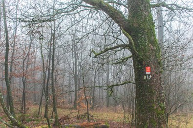 Baum mit Wegezeichen