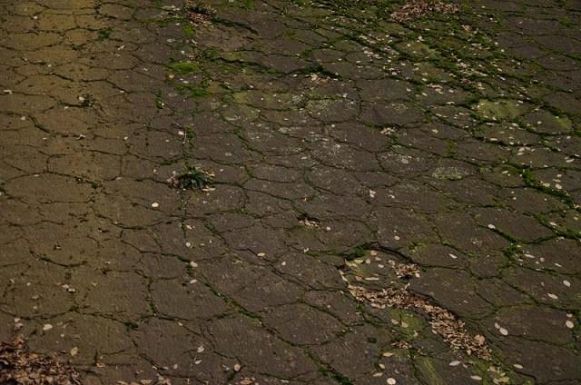 Grafen_und Moenchsweg (118)