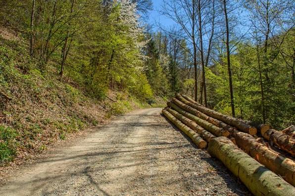 Viel Holz am Wanderweg