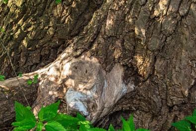 Ein Gesicht im Baum
