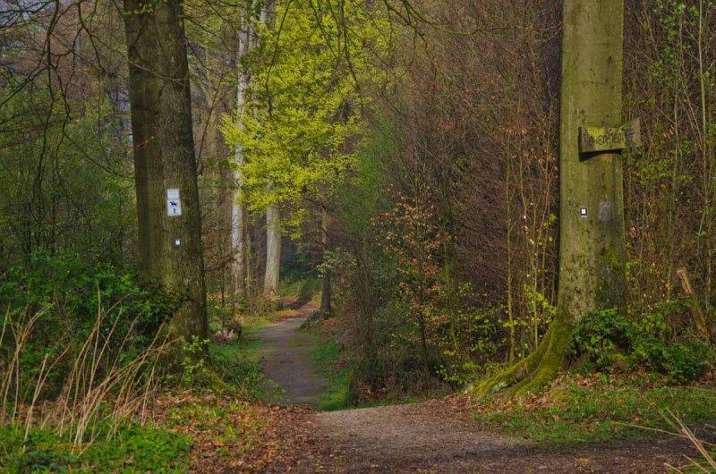 Mühlen und Bäche im Eifgenbachtal (14)
