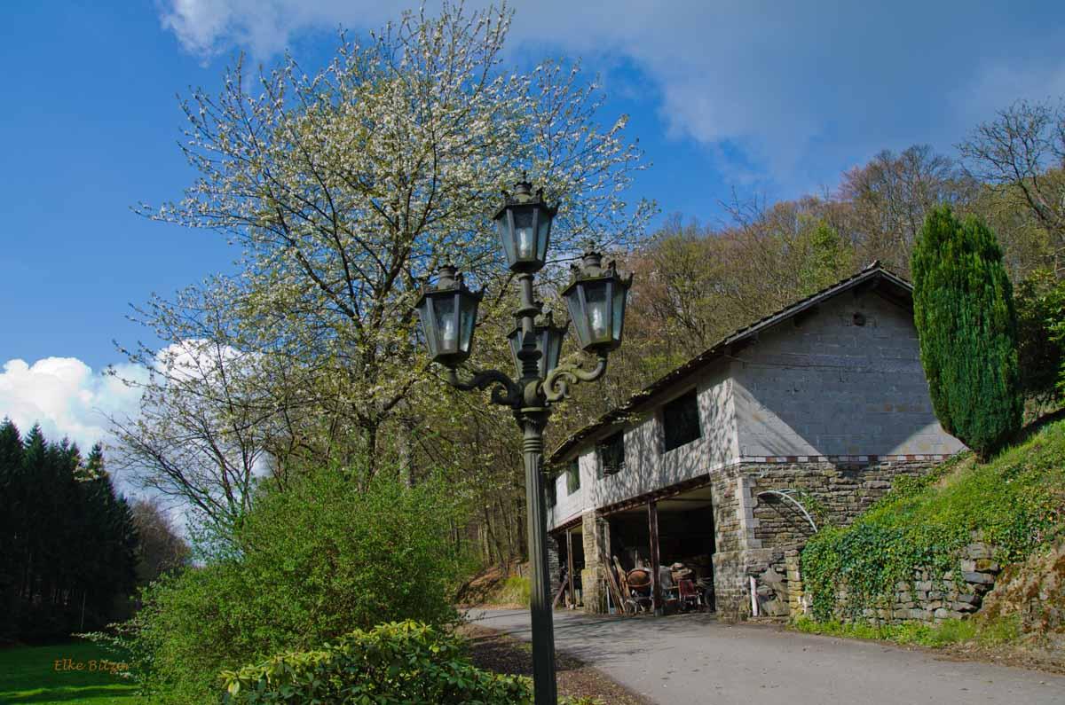 Mühlen und Bäche im Eifgenbachtal (95)