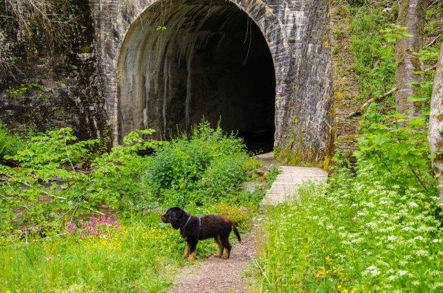 Durch diesen Tunnel geht es auf schmalem Randstreifen in einen wunderschönen Auenwald