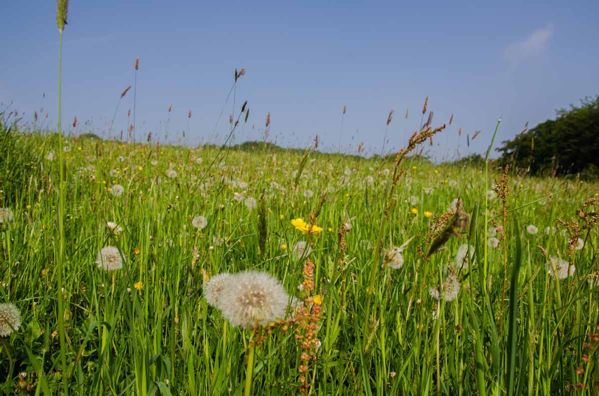 Wilde Wiese - Von Hof zu Hof - Alles BIO auf den Höfen im Windrather Tal