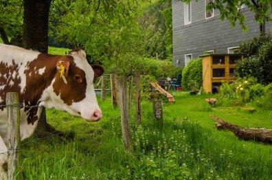 Mal schauen was die Fellnase auf meinem Hof will