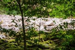 Die Steine, im Wald vor Licht geschütz, vermoosen. Die in der Sonne liegenden Steine bleiben hell.
