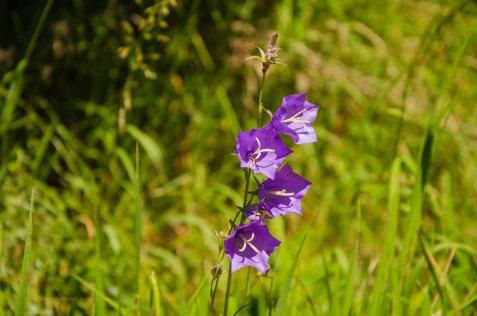Brotpfad - Orchideen