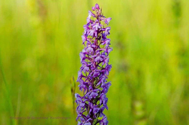 Orchideensuche bei Eschweiler