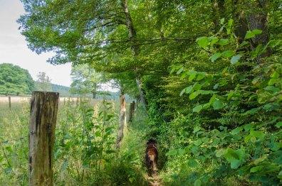 Schön zugewachsener Pfad, der aber ganz schnell wieder in Wald übergeht