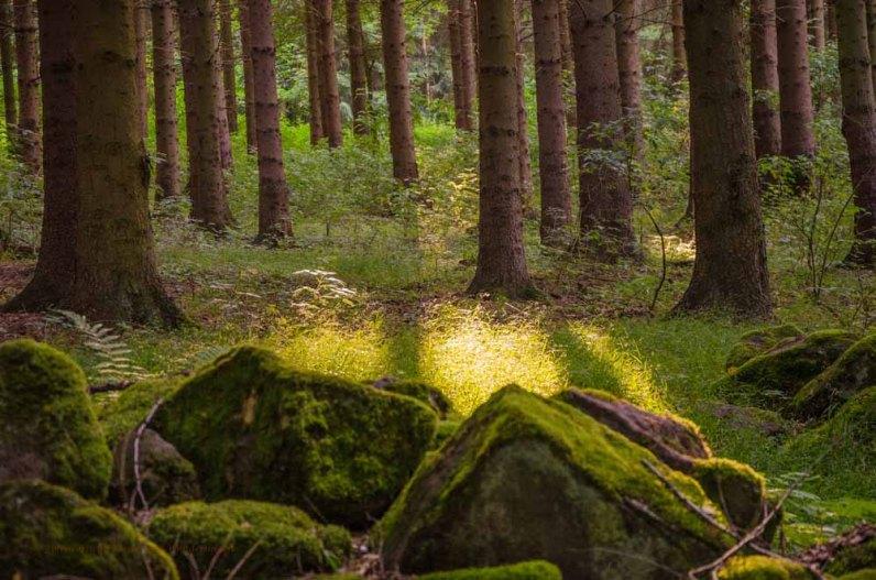 Wandern_in_und_um_die_Holzbachschlucht_0020