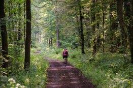 Wandern_in_und_um_die_Holzbachschlucht_0032