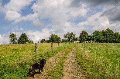 Bergischer Streifzug - Der Kräuterweg