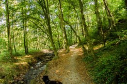 Stinderbachtal_0018