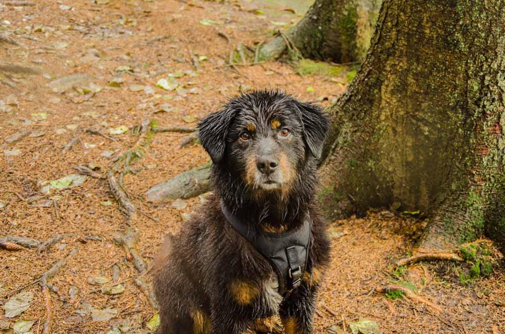 Sehr nasser Hund