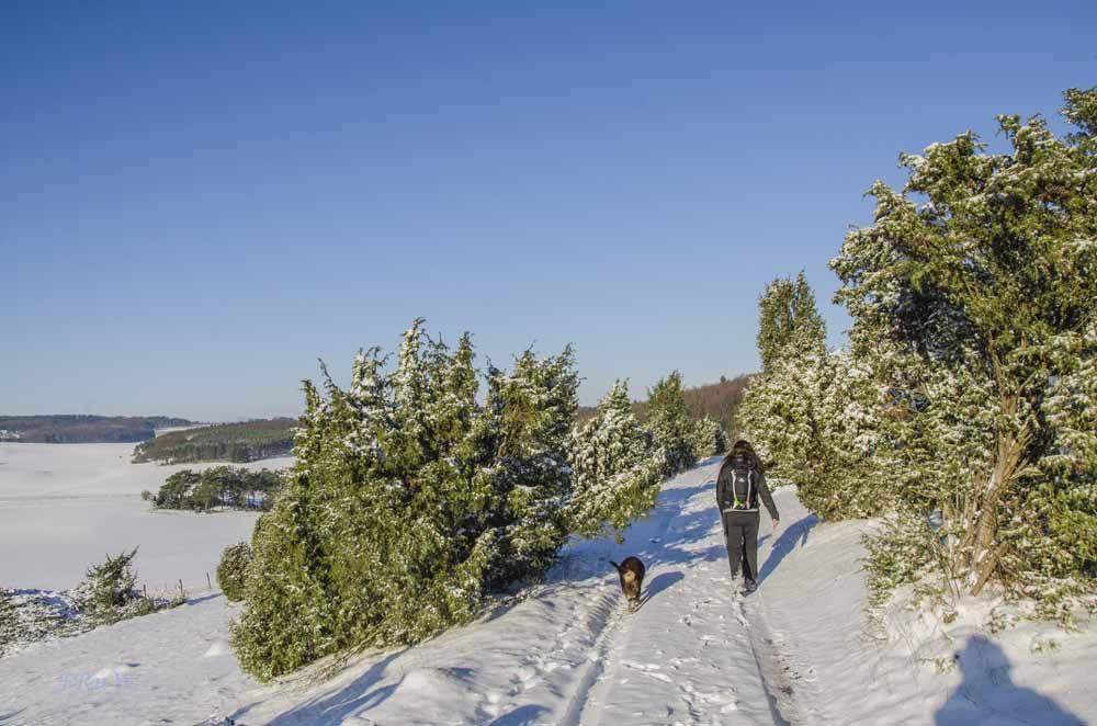 Wacholderheide im Winter