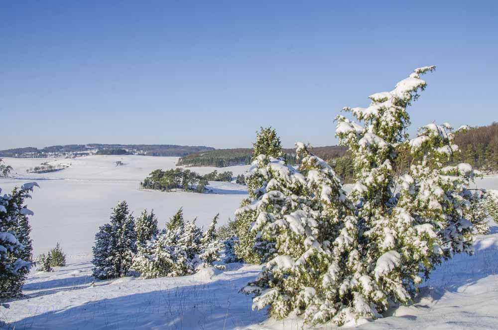 Winterwandertipps für die Feiertage Mirbach Wacholderheide_0257Spike
