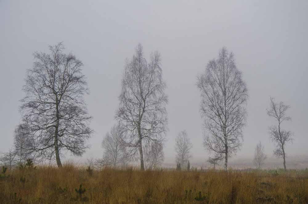 2015 01 17_Schwalmbruch_0244