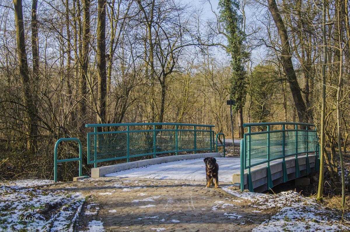 Erftauen und Schloss Türnich_0206