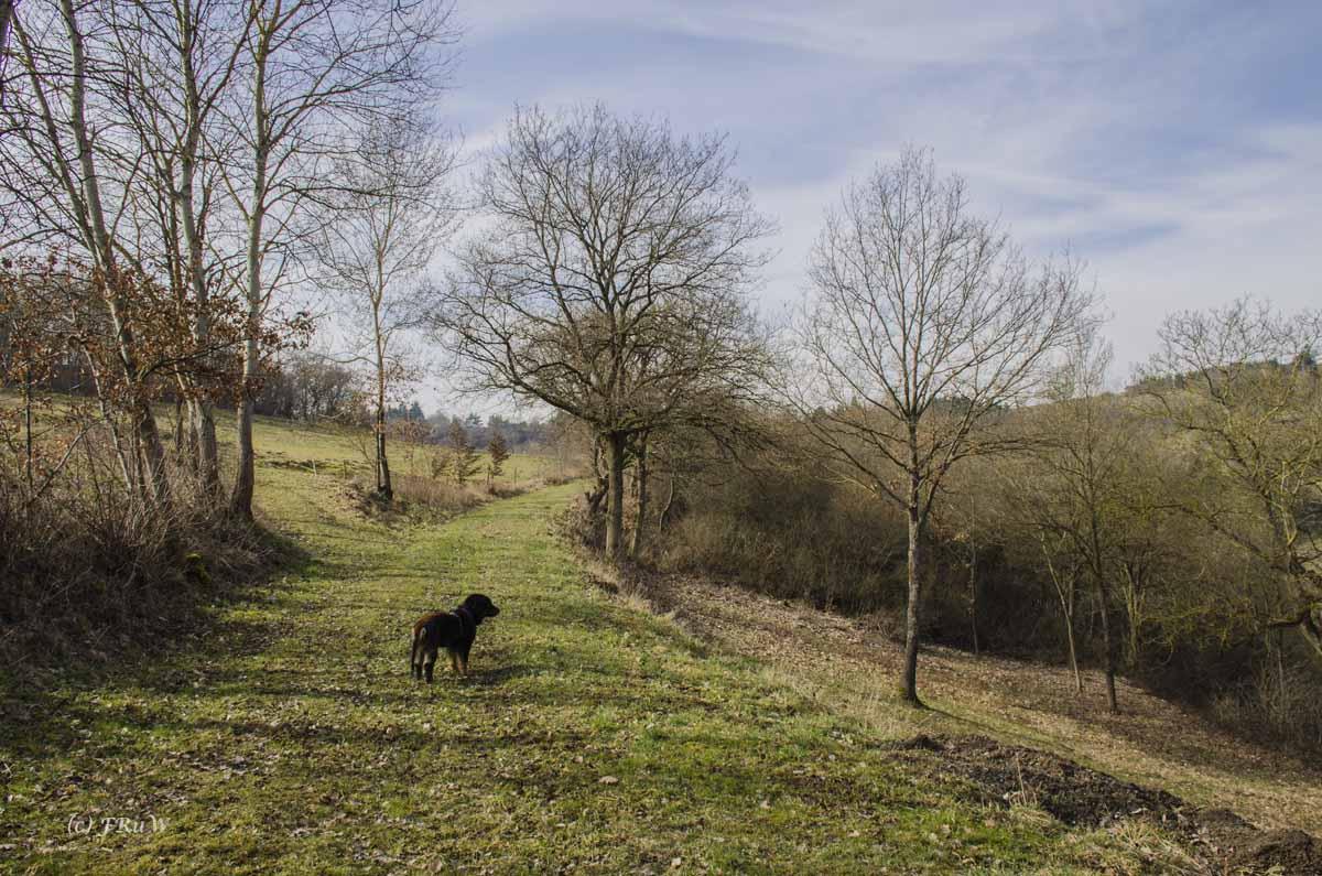 Frühjahrswiesenwege Zwischen Burg Rheinfels und Günderodehaus