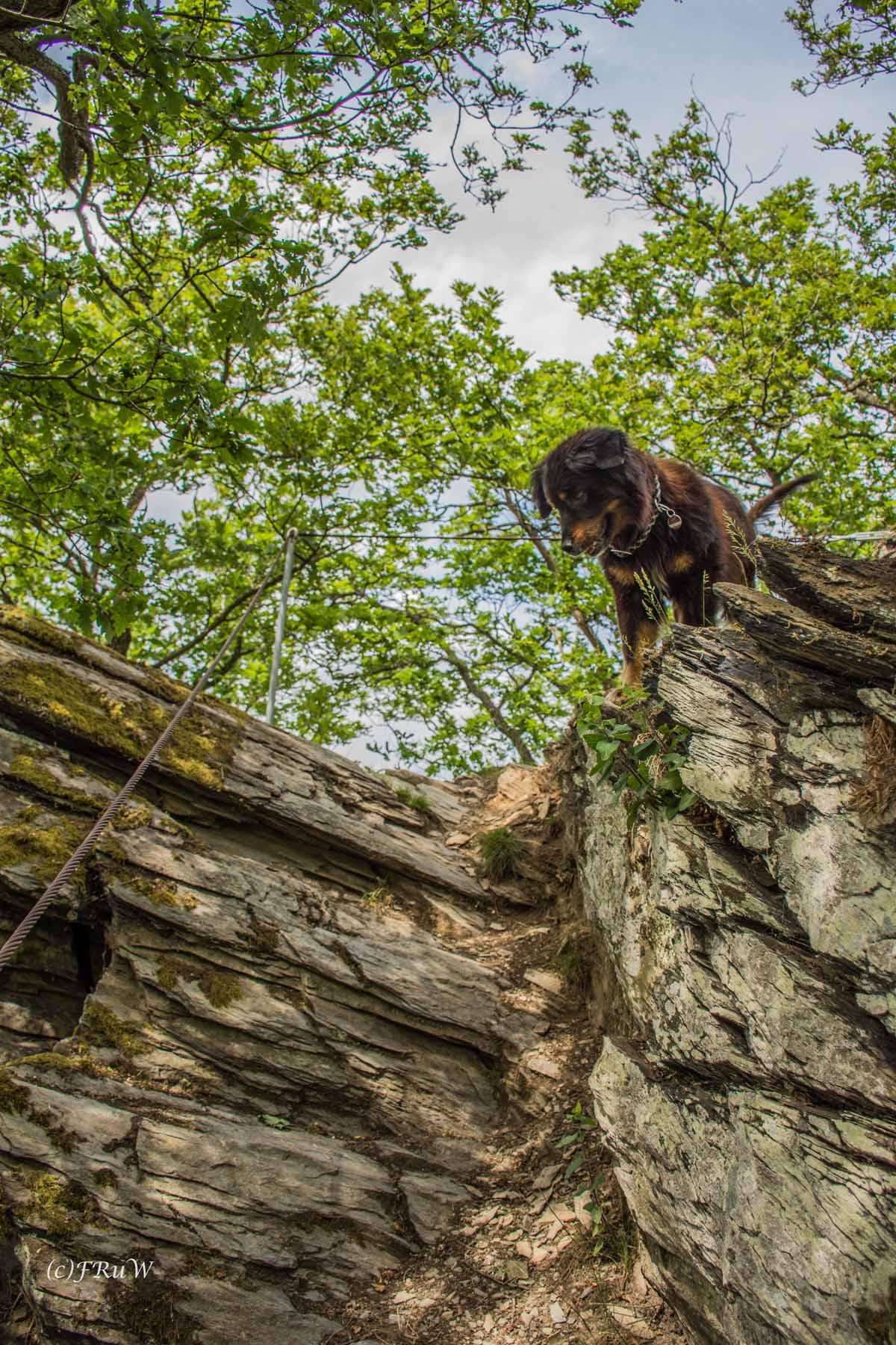 Auch Spike traut sich auf Leichte Klettersteige in Deutschland