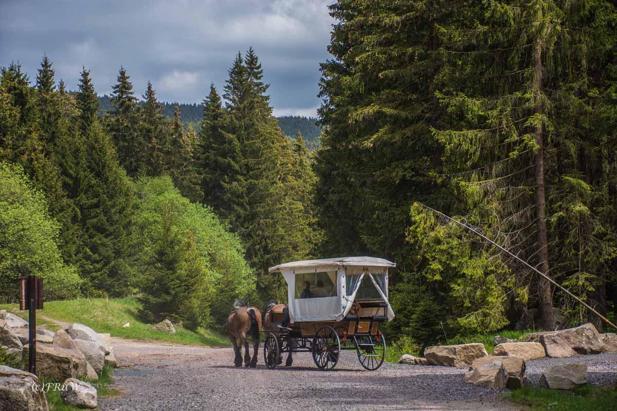 Kutschfahrt im Harz