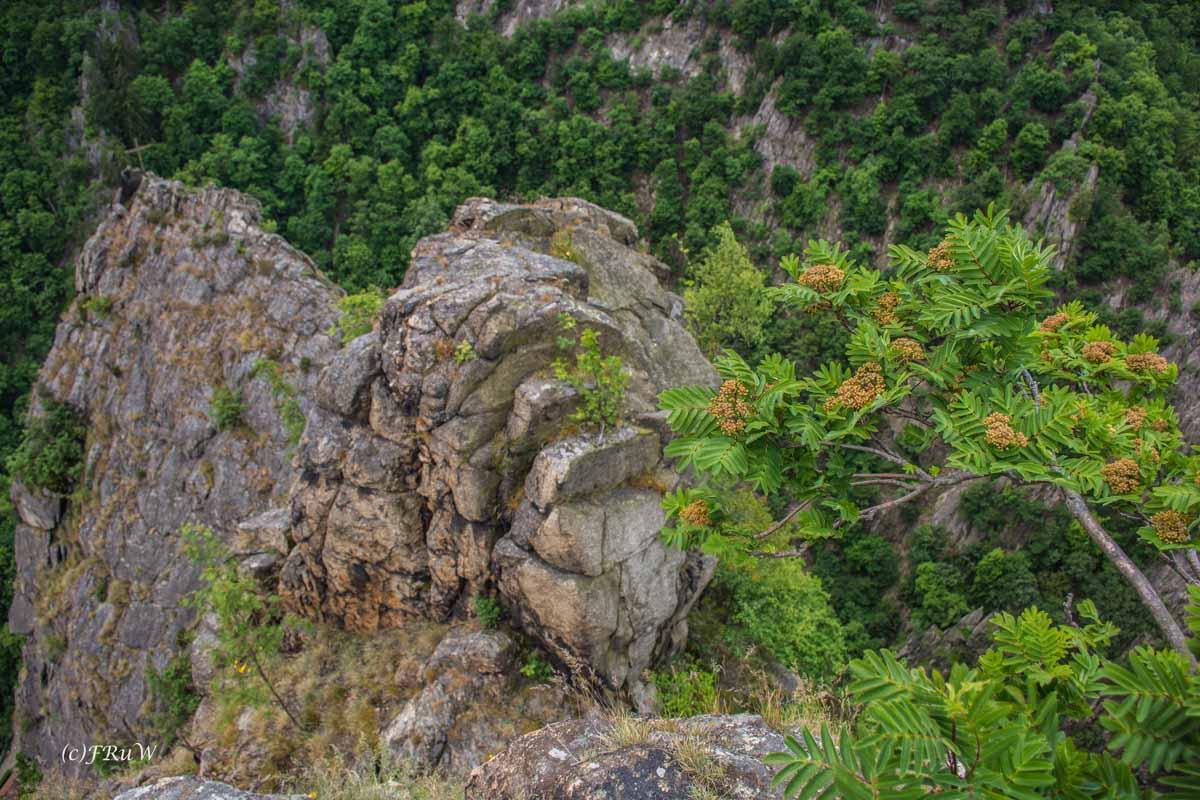 TOP Wandervorschläge im Harz
