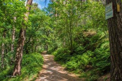 Urlaub Harz 2015_0864