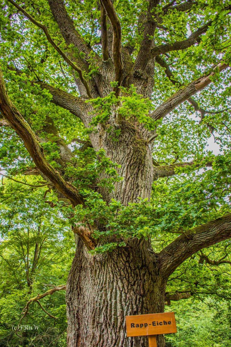 Bäume spenden Leben