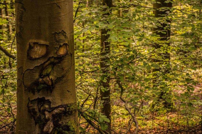 Urlaub Harz 2015_0947