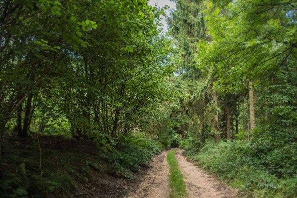 Matschige Waldwege im Wald bei Remagen