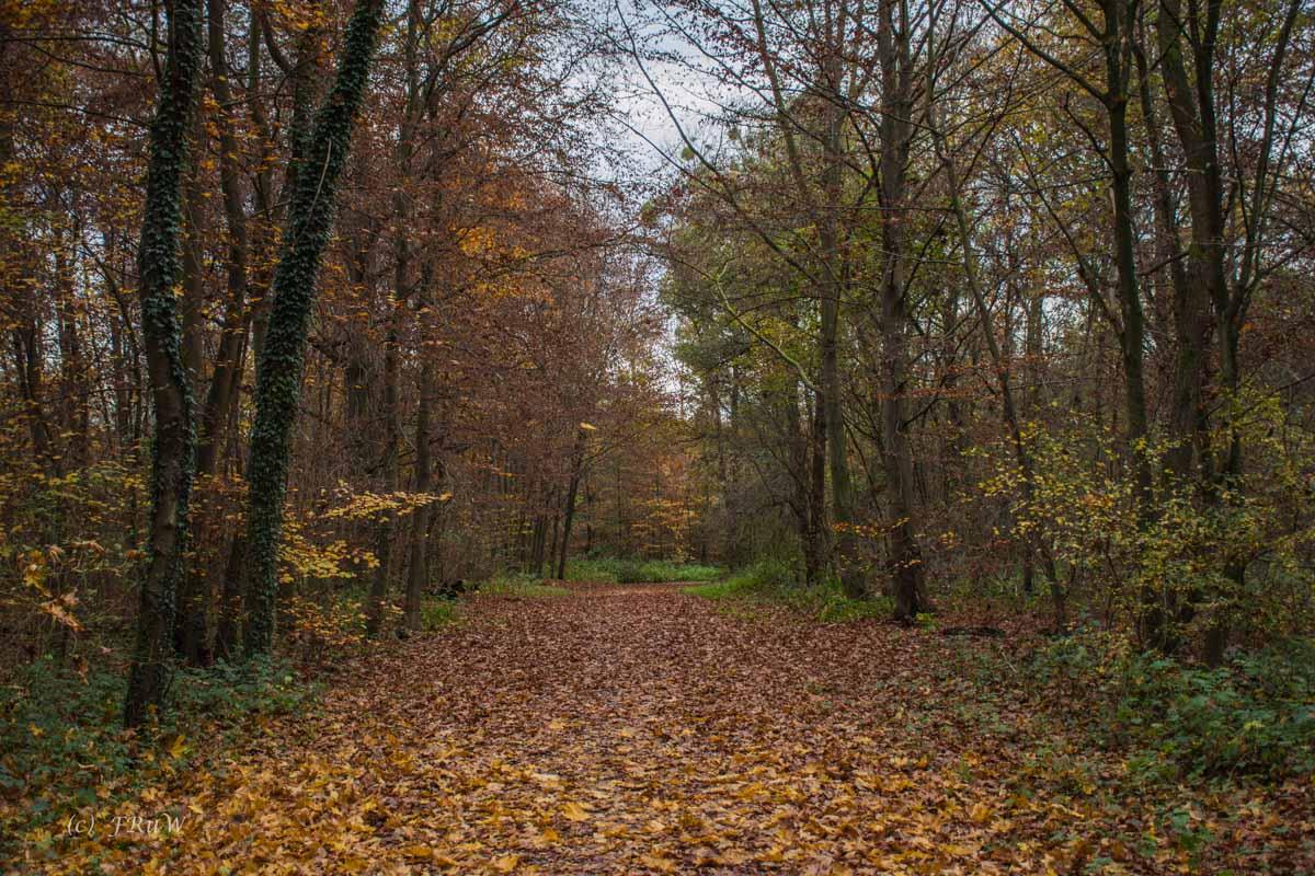 Brühler Seen (112)