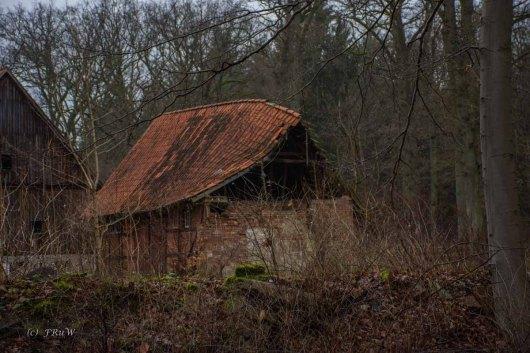 Wacholderwald (124)
