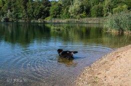 Hoehenfeldersee_Dellbrueck6