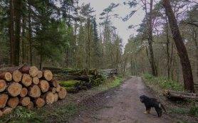 Wildpark_HoehenfelderSee_DellbrueckerHeide (28)