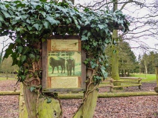 Wildpark_HoehenfelderSee_DellbrueckerHeide (44)