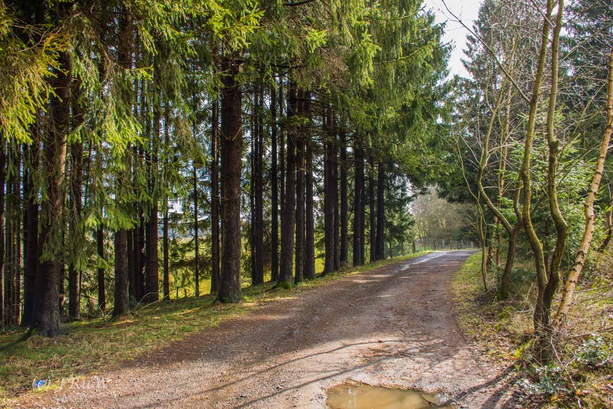 Wildenburger Land (28)